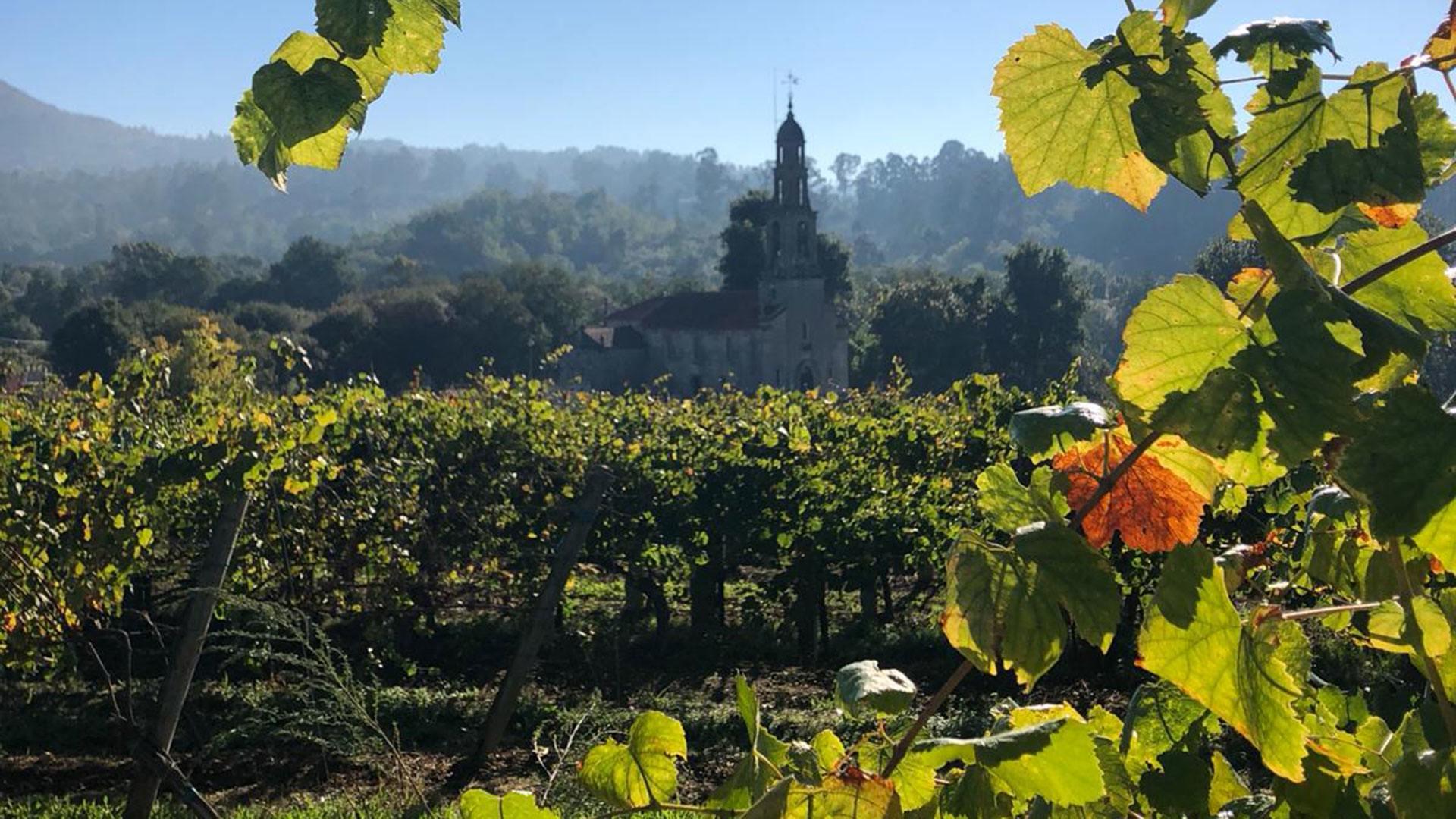 Visit to Galicia Vineyard - Pazo la Maza Albariño