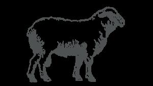 Organic Mutton